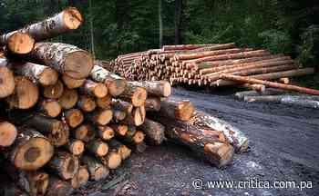 Ecologistas e indígenas protestarán contra tala de árboles el martes en Metetí - Crítica