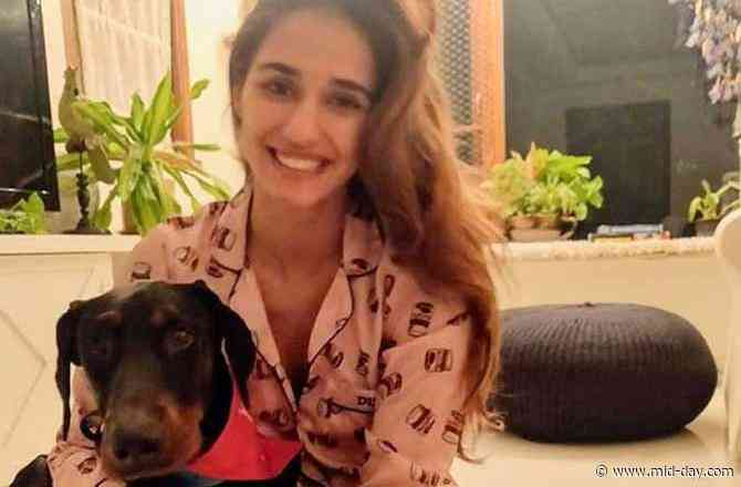 Disha Patani shares an adorable picture of her pet Goku; let's say hello!