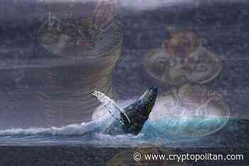 Bitcoin whales manipulating BTC high to $10000? - Cryptopolitan