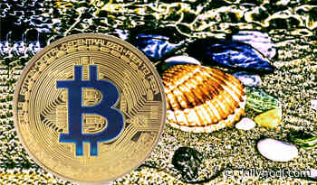 Warren Buffett Doubles Down on Why He Thinks Bitcoin (BTC) Is No Different Than Seashells - The Daily Hodl