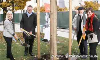 Donum Vitae: Ginkgo-Baum zum Geburtstag - Mittelbayerische