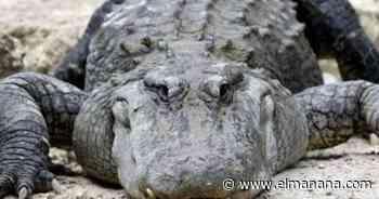 Educan sobre cómo tratar a los caimanes - El Mañana de Reynosa