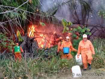 Un total de 20 hectáreas afectadas dejó incendio forestal en Guamal, Magdalena - Seguimiento.co