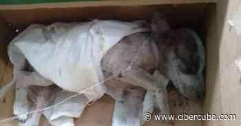 Denuncian envenenamiento de perros callejeros en Casilda, en Trinidad - CiberCuba