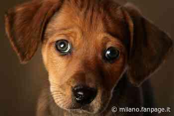 Sarezzo, cucciolo di cane di soli 6 mesi ucciso da un boccone avvelenato: secondo caso in un mese - Milano Fanpage.it