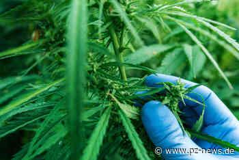 Indoor-Cannabis-Plantage mit über 500 Marihuanapflanzen in Keltern entdeckt: Polizei nimmt 23-Jährigen fest - Pforzheim - Pforzheimer Zeitung