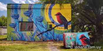 Un artista cordobés pintó cuatro muros de Aiguá con pájaros autóctonos - la diaria