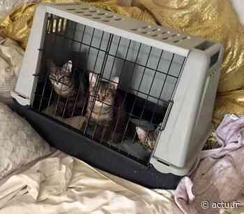Noisy-le-Grand. Elle vivait avec trente chats et chiens dans un appartement de 30 m² - actu.fr