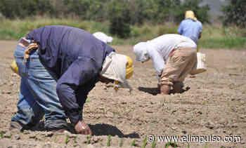 Productores del valle de Quíbor plantean necesidad de una ley - El Impulso