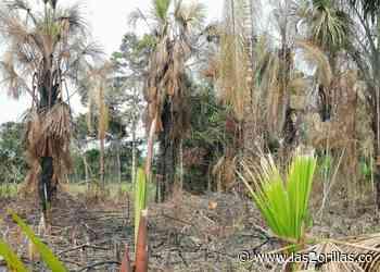 Escándalo por el humedal de Belén de los Andaquíes, Caquetá - Las2orillas