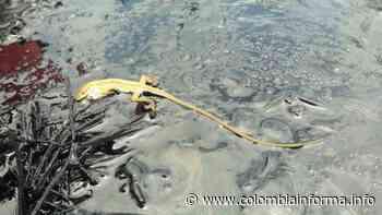 2.9K Medio Ambiente El Carmen de Chucurí, otra víctima del derrame de crudo en Santander - Agencia de Comunicación de los Pueblos Colombia Informa