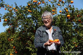 L.A. Times spotlights move to protect 'Noah's Ark of citrus' - UC Riverside