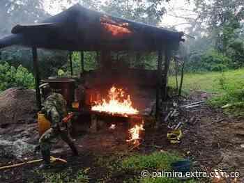 Destruyeron laboratorio de coca en Puerto Asís - Extra Palmira