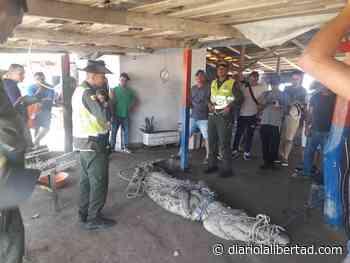 Policía retira caimán que estaba cerca de la playa - Diario La Libertad