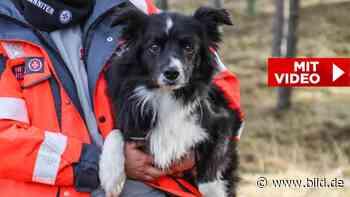 Prüfung für Rettungshunde bei Torgau: Meinem Biggs entgeht nix - BILD