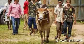 Video: ¡Cuidado, toro suelto! el animal embistió a una mujer y provocó un desastre en una corrida de toros - Clarín