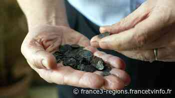 Orange : un collectionneur condamné à plus de 200 000 euros d'amende pour fouilles archéologiques sans auto - France 3 Régions