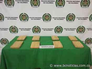 En Neira sorprenden a dos jóvenes cuando transportaban 4 mil gramos de marihuana adheridos a su cuerpo - BC Noticias