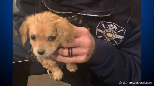 Adams County Firefighters Rescue Puppy Caught In Fireplace