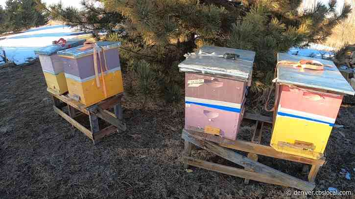 More Than A Misunderstanding: Northglenn Bee Keeper Loses More Than Half Of His Hives
