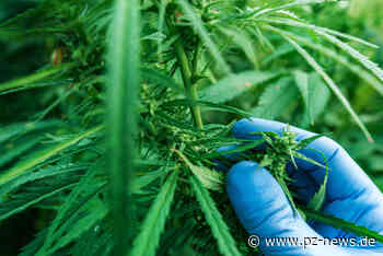 Indoor-Cannabis-Plantage mit über 500 Marihuanapflanzen in Keltern entdeckt: Polizei nimmt 23-Jährigen fest - Region - Pforzheimer Zeitung