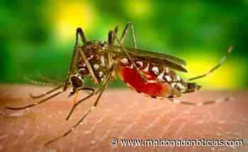 Dos jóvenes venezolanos asistidos en San Carlos fueron diagnosticados con malaria - maldonadonoticias.com