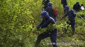 Campesinos en Briceño protestaron por el incumplimienti del programa de cultivos ilícitos - Alerta Paisa