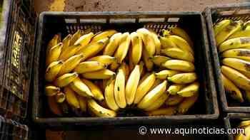 Bandidos furtam R$ 700 em bananas em Vargem Alta - Aqui Notícias - www.aquinoticias.com