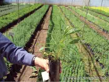 AGENCIA AGRARIA PRODUCIRÁ 6 VIVEROS FORESTALES EN LA PUCARA-TACABAMBA. - radio andina chota