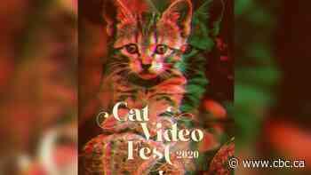 Purrr-fect feline fix with cat video festival in Detroit
