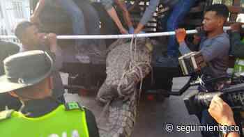 #Video Encuentran caimán aguja a pocos metros de la playa en Puerto Colombia - Seguimiento.co