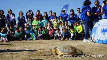 Escolares limpian la playa de las Arenas y sueltan una tortuga - Levante-EMV