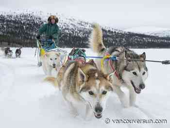 Animal activists call on Canada to end commercial dog sledding