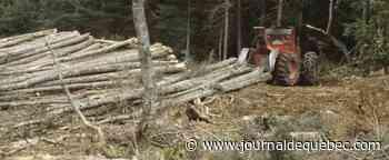 Réduction des GES: le secteur forestier peut faire une différence importante