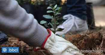 Piden reforestar con árboles nativos las costas de Valdivia para hacer frente a la escasez de agua - BioBioChile