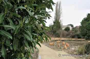 Hérissons, libellules, papillons… Epinay-sur-Seine inaugure une «réserve écologique» et pédagogique - Le Parisien