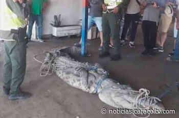 Un caimán de 4 metros causó pánico entre niños que jugaban en una playa de Puerto Colombia - Noticias Caracol