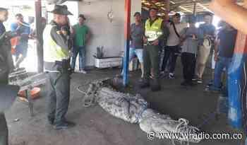 Autoridades atraparon caimán en playa de Puerto Colombia que nadaba hacia cuatro niñas - W Radio