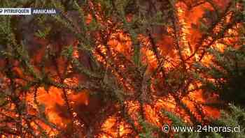 Evacúan casas por incendio forestal en Pitrufquén - 24Horas.cl