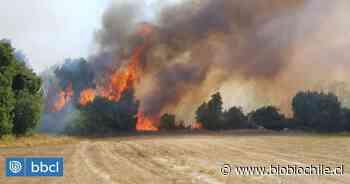Declaran Alerta Roja para Temuco, Pitrufquén, Gorbea y Los Sauces por incendios forestales - BioBioChile