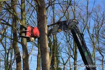 Kleinbecker Park in Horstmar: Rodung für neue Wohngebäude hat begonnen - Ruhr Nachrichten