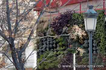 Un jardín vertical limpia y reutiliza aguas en un colegio de Benicalap - Levante-EMV