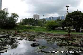 Hombre mató a su pareja y abandonó el cadáver en el Jardín Botánico - El Nacional