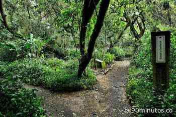 Con gala benéfica buscan recaudar fondos para recuperar el Jardín Botánico de Cali - 90 Minutos