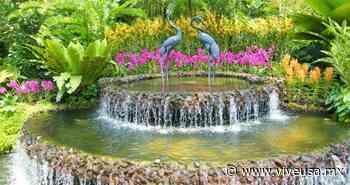 Visita la exhibición de orquídeas en el Jardín Botánico de NY   ViveUSA.mx - ViveUSA