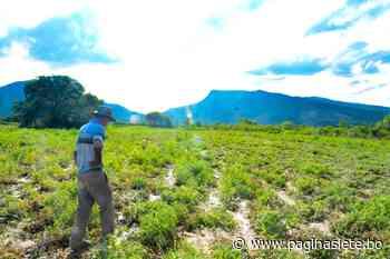 Cochabamba: Desborde de ríos en Mizque afecta cultivos en 14 comunidades - Pagina Siete