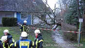 Doppeleinsatz für Feuerwehr Flechtorf – Baum fällt auf Grundstück