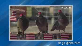 Ativistas pró-Trump colocam 'boné' com slogan do presidente em pombos - G1