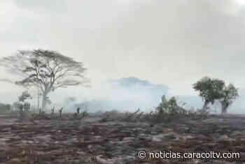Grave incendio forestal afecta la Ciénaga de Corralito en Córdoba - Noticias Caracol