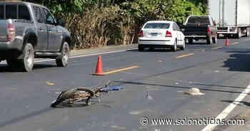 Sucesos 2020-02-19 Ciclista arrollado por una rastra en carretera de Jujutla, Ahuachapán - Solo Noticias El Salvador
